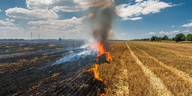 Administration to adopt multi-pronged strategy to shun stubble burning practices in Jalandhar: Thori